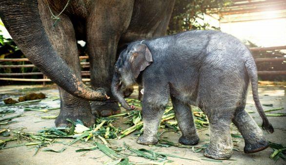 Elefant im Kui Buri Nationalpark