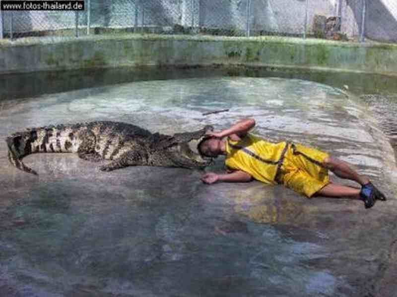 Krokodilshow auf Koh Samui